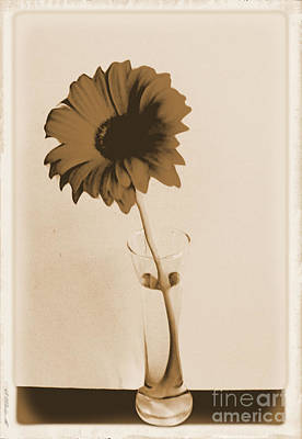 Antique Roses Vase Wall Art - Photograph - Old Picture Of A Daisy by Marsha Heiken