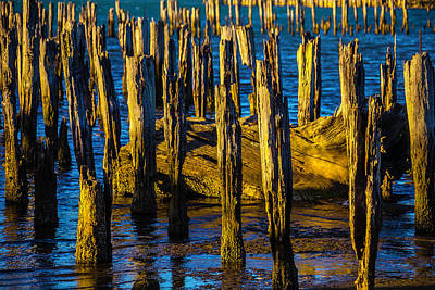 Old Pier Posts In Evening Light Print by Garry Gay