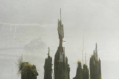 Photograph - Old Pilings Dissolve by Robert Potts