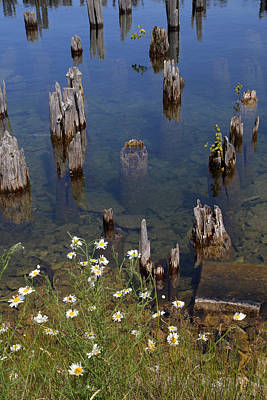 Photograph - Old Pilings Fayette State Park 1 by Mary Bedy