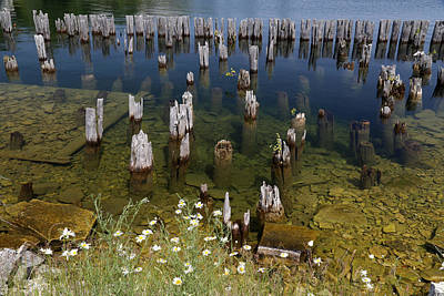 Photograph - Old Pilings Fayette State Park 3 by Mary Bedy