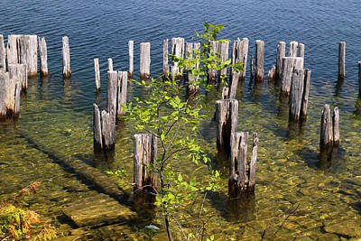 Photograph - Old Pilings Fayette State Park 4 by Mary Bedy