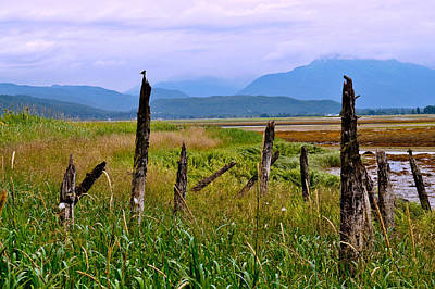 Photograph - Old Pilings - Fish Creek - Douglas Island by Cathy Mahnke