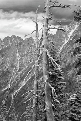 Photograph - Old Pines Cascades by Peter J Sucy