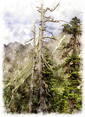 Old Pines Cascades Wc Art Print by Peter J Sucy
