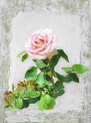 Photograph - Old Pink Rose by Janette Boyd