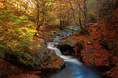 Balkan Mountains Photograph - Old River by Evgeni Dinev