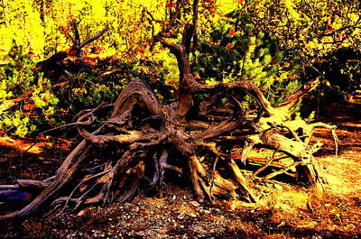 Old Roots Art Print by Aron Chervin