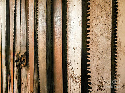 Photograph - Retired Rusted Saws by Lexa Harpell