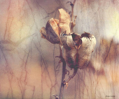 Photograph - Old Seed Pods by Anna Louise