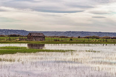 Photograph - Old Shed On Marsh by Belinda Greb