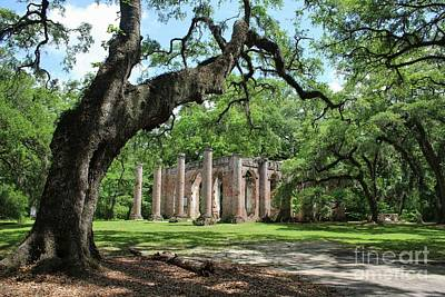 Photograph - Old Sheldon Church Ruins With Live Oak by Carol Groenen