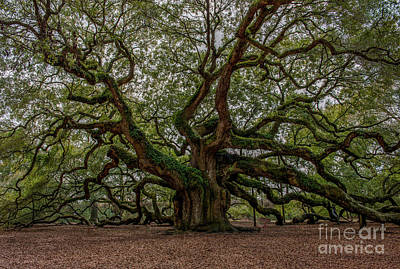 World War 2 Action Photography - Old South Angel Oak Tree by Dale Powell