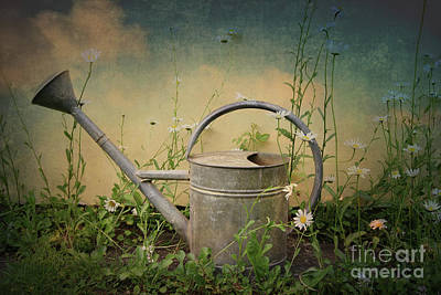 Photograph - Old Sprinkling Can Between Daisies by Michal Boubin