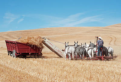 Photograph - Old Time Harvesting by Doug Davidson