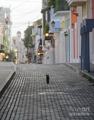 Photograph - Old Town Alley Cat by Suzanne Oesterling