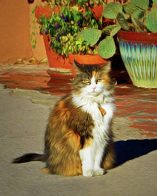 Photograph - Old Town Cat by Nikolyn McDonald