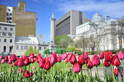 Photograph - Old Town Montreal Through Tulips by Dennis Ludlow