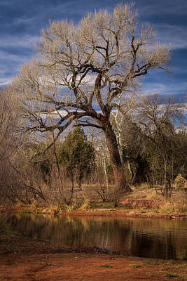 Photograph - Old Tree Along Oak Creek by Rick Strobaugh