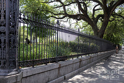 Old Tree And Ornate Fence Art Print