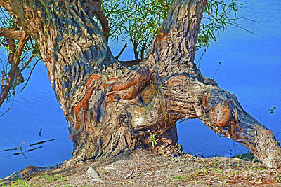 Photograph - Old Tree And The Lake 12018-6 by Ray Shrewsberry