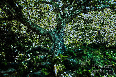 Photograph - Old Tree As I Saw It by Allen Nice-Webb