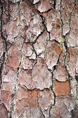 Photograph - Old Tree Bark by Richard Bryce and Family