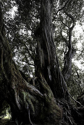 Photograph - Old Tree by Edgar Laureano