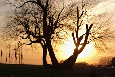 Photograph - Old Tree In Dc by Buddy Scott