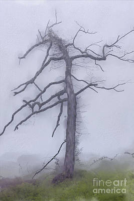 Groundhog Digital Art - Old Tree In Fog In The Blue Ridge Ap by Dan Carmichael