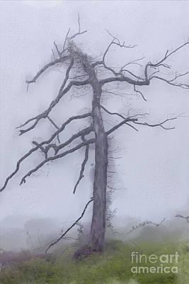 Groundhog Digital Art - Old Tree In Fog In The Blue Ridge Ap by Dan Carmichael