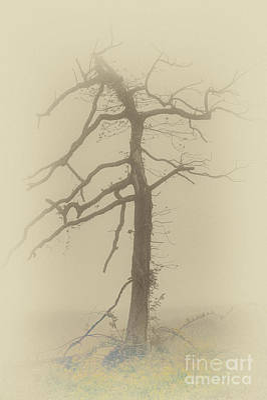 Old Tree In Fog In The Blue Ridge Fx Art Print