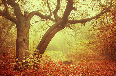 Photograph - Old Tree In Golden Foggy Forest by Jenny Rainbow