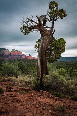 Photograph - Old Tree In Sedona by Rick Strobaugh