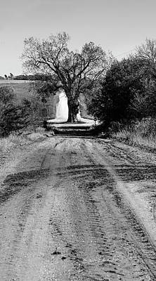 Photograph - Old Tree In The Road by Edward Peterson