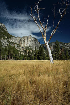 Photograph - Old Tree Inyosemite Valley by Rick Strobaugh
