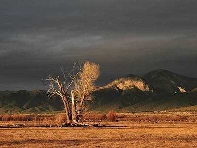 Photograph - Sunset On The Old Cottonwood by Jeannie Bushman