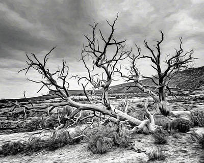 Photograph - Old Tree - Kachina Bridge Viewpoint - Utah by Nikolyn McDonald
