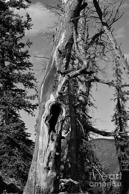 Photograph - Old Tree Monochrome by Chalet Roome-Rigdon