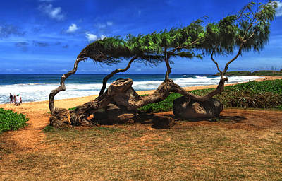 Photograph - Old Tree On The Beach by Gordon Engebretson