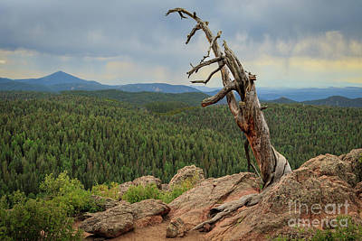Photograph - Old Tree On The Mountain by Richard Smith