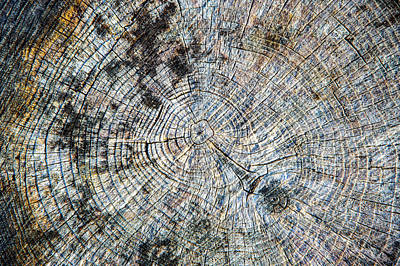 Photograph - Old Tree Rings by David Hare