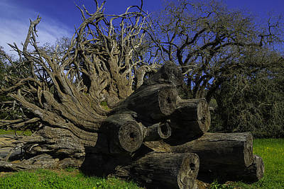 Tree Roots Photograph - Old Tree Roots by Garry Gay