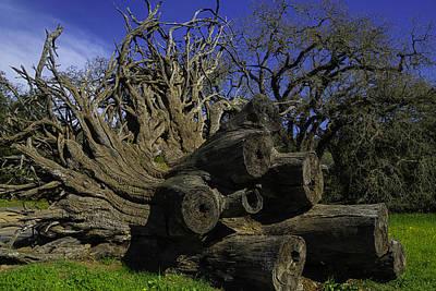 Old Tree Roots Art Print