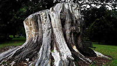 Photograph - Old Tree Trunk by Nareeta Martin