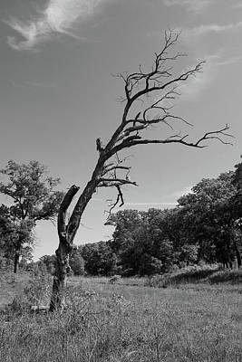 Photograph - Old Tree With A Bit Of A Lean by Scott Kingery