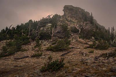 Old Trees Reaching Through The Fog Art Print