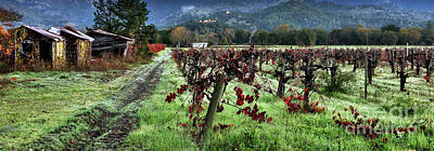 St Helena Photograph - Old Vineyard Barns by Jon Neidert