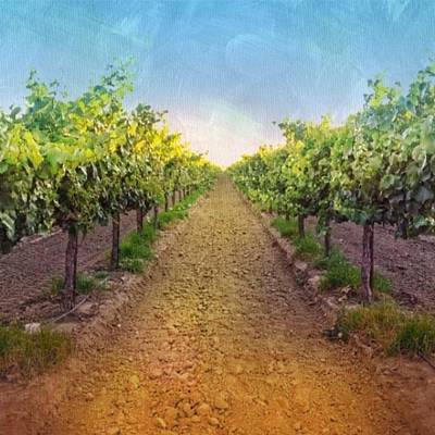 Painted Photograph - Old #vineyard Photo I Rescued From My by Shari Warren