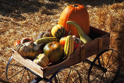 Gourds Photograph - Old Wagon Full Of Autumn Fruit by Garry Gay